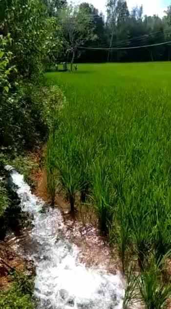 Green india#green #kingkohli