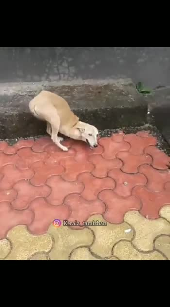 respect the stray dogs 💔😫