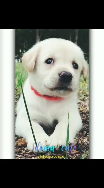 #doglover #cutedogs #dogs_of_instagram