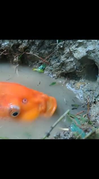 fish vs fish