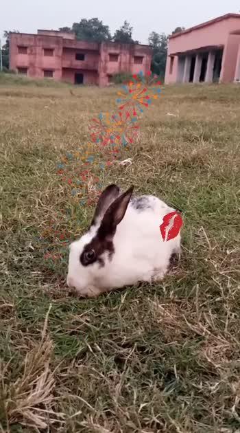 #rabbitlove #animallovers