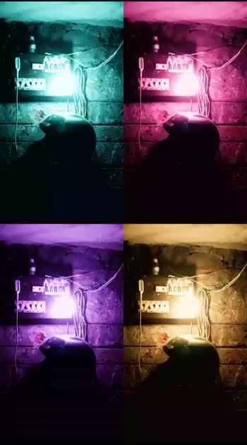 light####