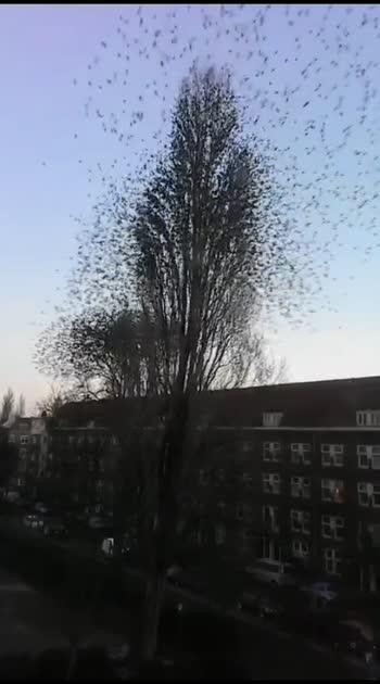 #caputred #treelover #birds #tree_magic