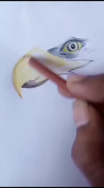 Eagle Eye..🦅 #sketchbyme @roposocontests plz viral this one...🤞 #art #creativespace #artist #sketch #sketchinglove #love #risingstars #roposostars #abhiraje ❤️