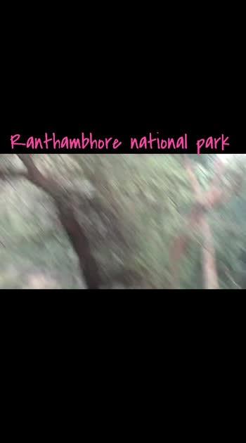 ranthambhore national park k zone 1 mai Tigress Leapord se apne kill ko bachati huyi..