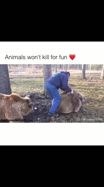 #animallovers #animalsfacts #animeart #animalworld #animalcare