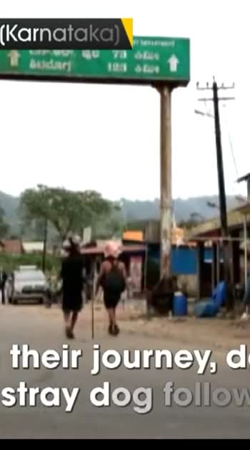 viral video stray dog walks 480 km with 13 ayyappa