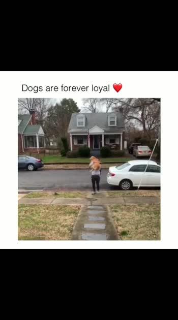 #doglover #dogsofinstagram #dogoftheday #dogs_of_instagram