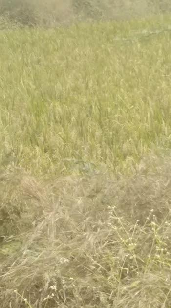 #field #