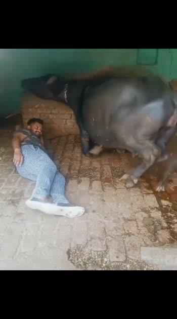 #buffalo #lovestatus