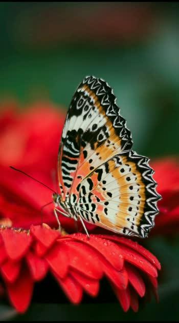 calm Butterfly #