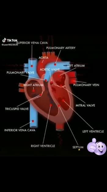 #mechanism#workingofheart