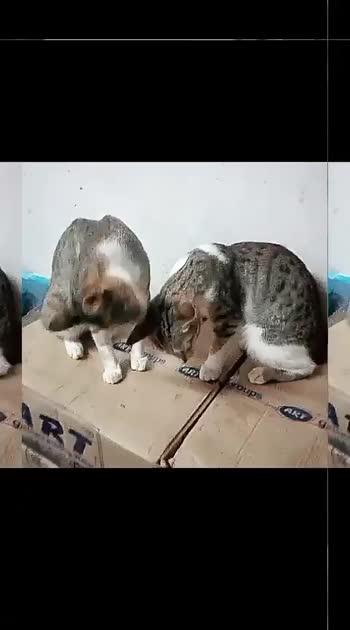 #catslover #cats #catsofinstagram