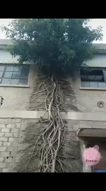 #treescollection #tree #treelover #tree_magic #trees #trendingvideo #tree_perfection