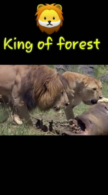 Lions king
