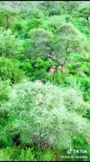 #wildlifesafari #animallover
