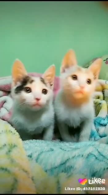 cat lover animal lover