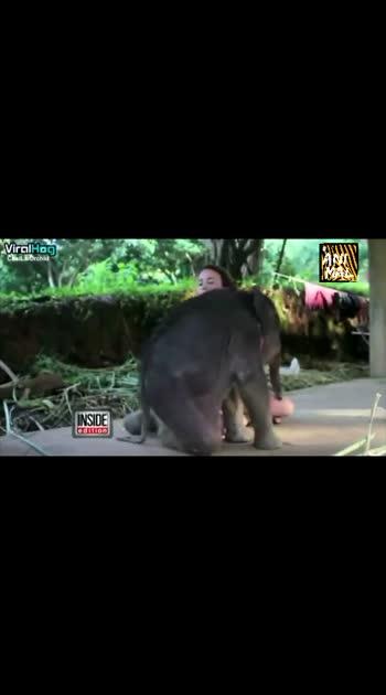 #animallover #elephant