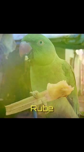 #petanimals #parrotlovers #parrot #mycreativity #engaveettupillai #engaveetu