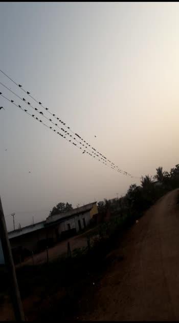 #morningscenes #birds