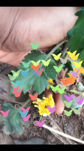 #risingstaronroposo #risingstars #rishingstar #risingstaronroposoostarchannal #risingstarsonroposo #soulfulquotes #soulfulquoteschannel #soulful_status #beatschannel #soulful_moments #soulful_status #risingstaronroposoostarchannal #beatschannel #rosopo-ha-ha-ha #roposobeauty #flowerslovers #flowerstyles_gf #flood #floralsarees