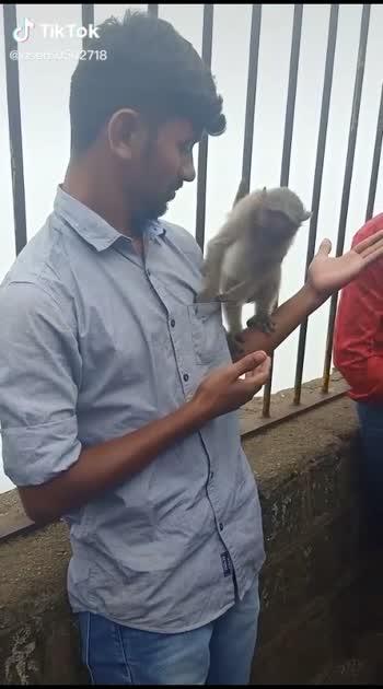 #palanimalai  #monkey