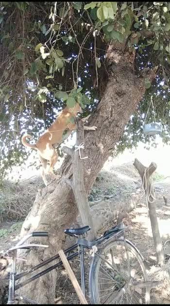 dog claim tree#dog #doglover
