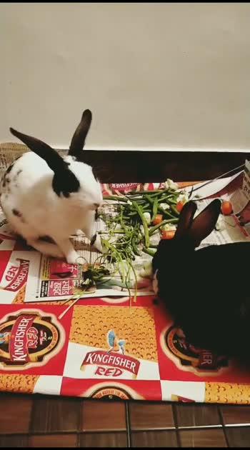 cuties 🥰  #roposostar #cute #rabbitlove #love #video #new #beatschannel #beautiful #roposo-beats #roposo