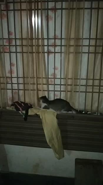 #roposostar #riaingstar #dramebaaz #kitten #funnyvideo #roposostarchannel