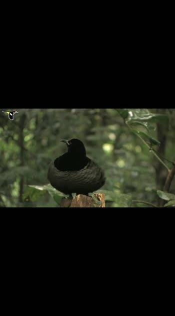 Birds #birdsworld #birdslover #birds