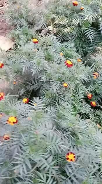 #awesomevideo #awesome-nature #homegarden #nature #naturelover #प्रकृति की #सुंदर छवि #खूबसूरत