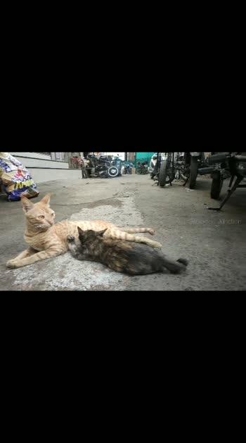 2 street cat #kitten  / Rockfort Junction #Rockfortmotorworks