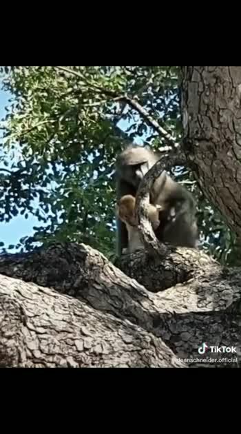 #animallover#forest#wildlifesafari