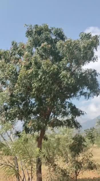 tree###treelover