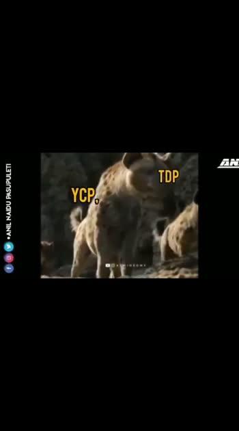 #pspk #lionking #fansbeats #pspkfans #politics #roposo-politics #superb #pspkcraze #pspk_fan_forever