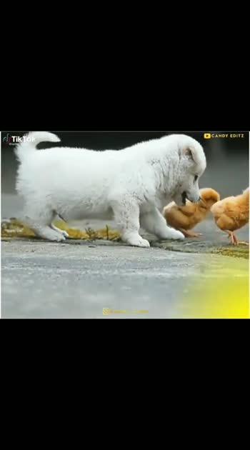 puppies#puppylove