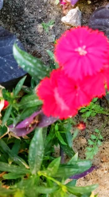 #flowerslovers #flowermagic #tamilbgm