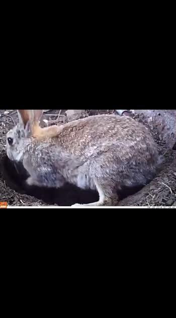 #rabbitlove