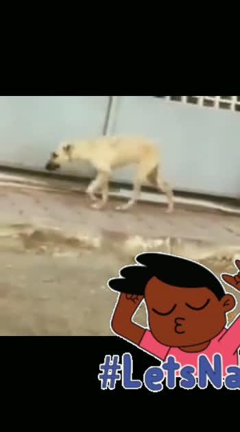 dog dance #dog #dance
