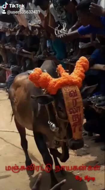 Vellore tirupattur district king cows