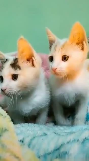Cute Cute 🐈