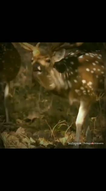#superstar-rajinikanth #wildlifesafari
