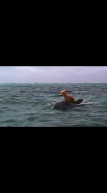 #dolphinshow  #dolphins  #roposowowchannel  #featuredvideo  #featurethisvideo