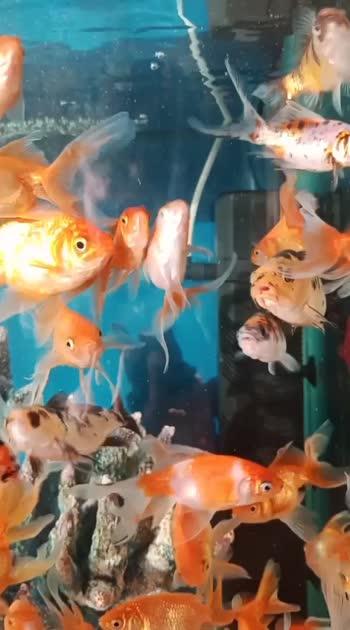 #mugulunage#fish#aquariumfish