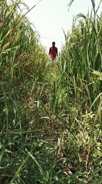 #fields#nature #mahirshi#nature #cool #