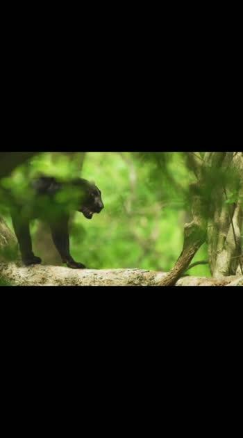 #wildlife #forestanimals
