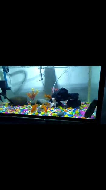 #aquarium #aquariumfish #fishes