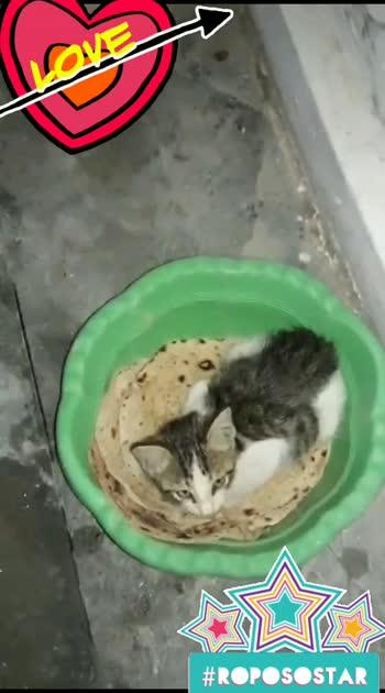Cute Kitten Munna #kitten