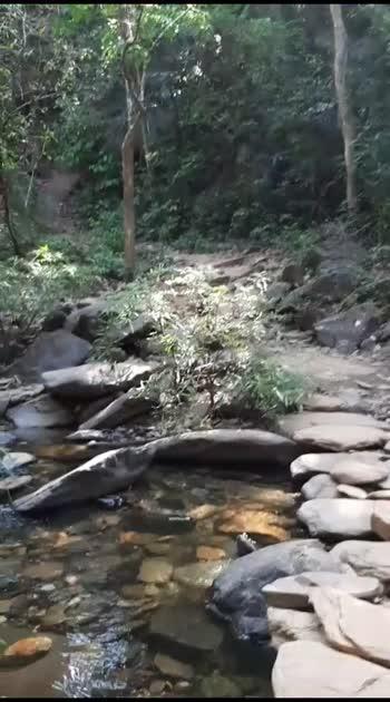 #forest #travel #travelvidoes #travelblogger #traveladdict #videos #kannada #waterfalls #wildlife #trending #karnataka #newtalent #roposostars #roposorisingstars #potentialrisingstars