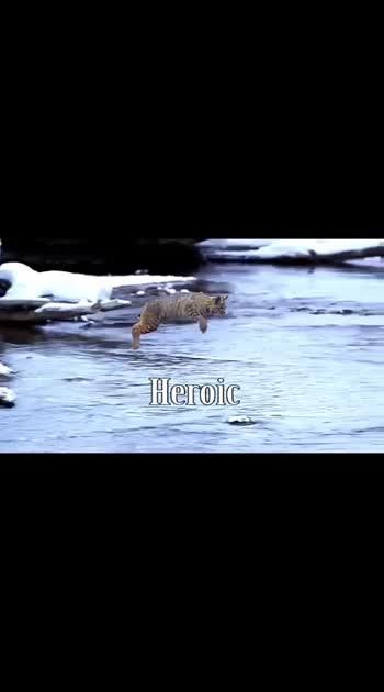 #amazing-video
